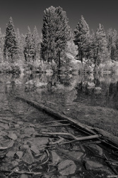 The Log In The Lake